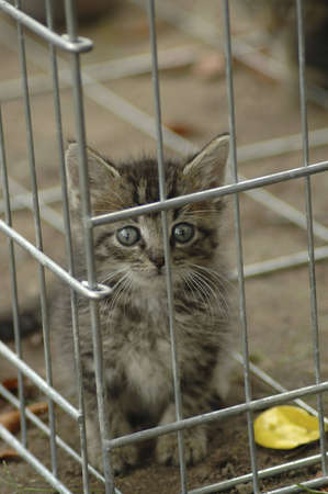 A humane society kitten peering out of a kennel. Imagens