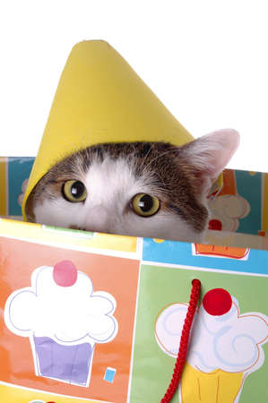 An adorable cat with a birthday hat. The cat is sitting in a gift bag. Imagens