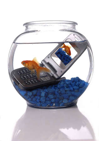 A goldfish in a bowl swims by a cell phone submerged in the water. A picture of the same goldfish is displayed on the screen of the cell phone. Orientation is vertical. photo