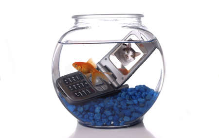 A goldfish in a bowl swims by a cell phone submerged in the water. A picture of a cat is displayed on the screen of the cell phone. Imagens