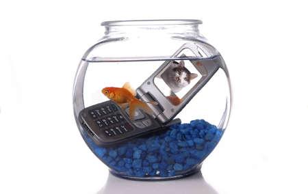 sumergido: Un pez de colores en un bol nada por un tel�fono celular sumergido en el agua. Una foto de un gato en la pantalla del tel�fono celular.