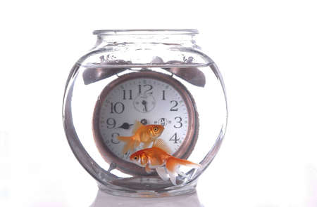 Two fish swim in a bowl in front of an alarm clock that appears to be submerged. photo