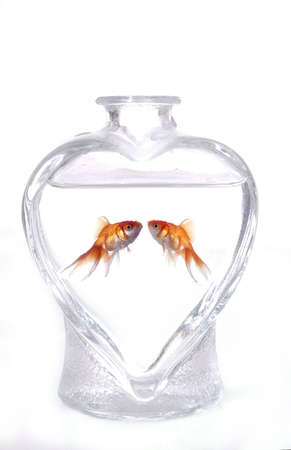 to commit: Two goldfish face one another in a heart-shaped vase filled with water. The background is white.