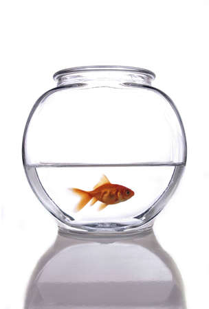 A goldfish in a bowl against a white background.