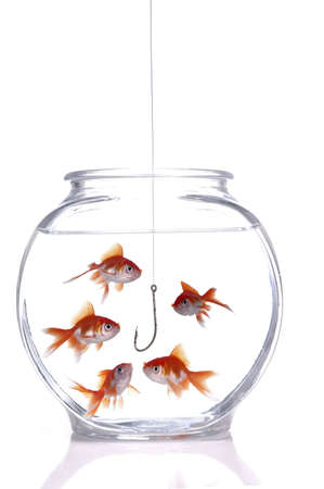 A school of fish gawk at a fish hook hanging in a fish bowl. White background. Imagens