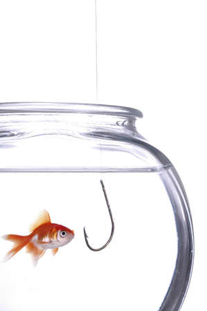 A fish gawks at a hook hanging in the fish bowl. White background. photo