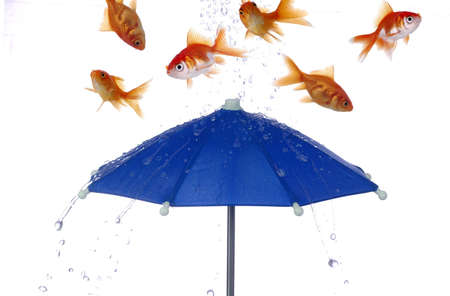 Goldfish and water bounce off of a bright blue umbrella. White background.