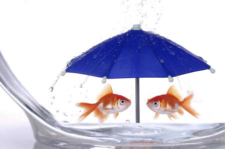 irony: Two goldfish in a bowl take shelter from the rain under a bright blue umbrella.