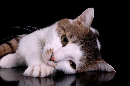 A brown and white cat rests his head on a paw. Black background. The cat is lying on a reflective surface.