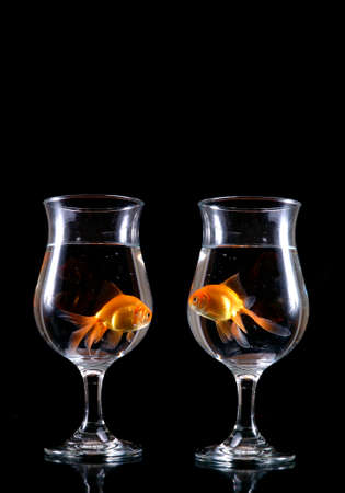 Two goldfish gaze out of separate wine glasses. Black background. Imagens