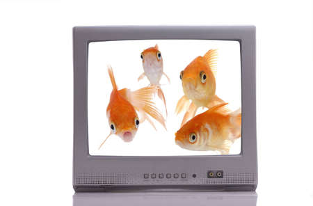 viewer: A group of curious goldfish on a television screen stare out at the viewer.