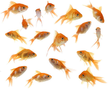 A collection of cute and whimsical goldfish against a white background. Imagens