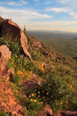 An Arizona mountainside dotted with Mexican poppies. Imagens