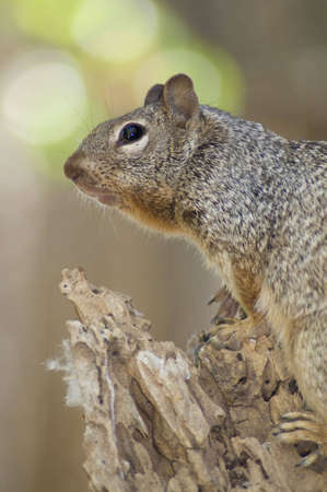 A cute squirrel uses a tree as a vantage point.