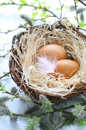 easter eggs in a nest with feather photo