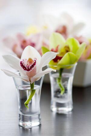 flores exoticas: orqu�deas de belleza en vasijas de peque�o de vidrio