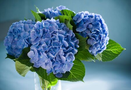 vase: blue hydrangea blossom in a vase.