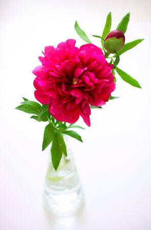 Pink peony in vase photo