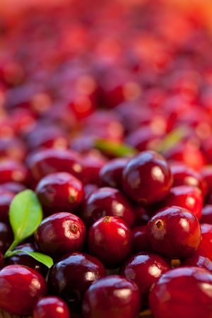 Fresh red cranberries with leaves photo