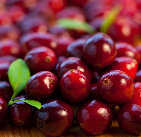 cranberry fruit: Fresh red cranberries with leaves