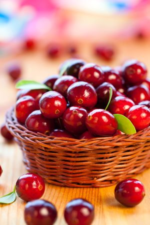 cranberry fruit: Fresh red cranberries with leaves in basket