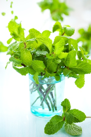 Fresh green mint in glass on the table photo