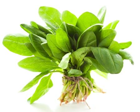 espinacas: Manojo de espinacas frescas sobre fondo blanco Foto de archivo