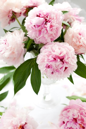 peony: Vase of peony blooms Stock Photo
