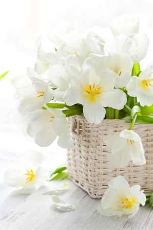white tulips in a basket on the wooden table photo