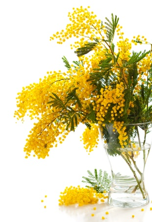 Vase of yellow mimosa on the white  background photo