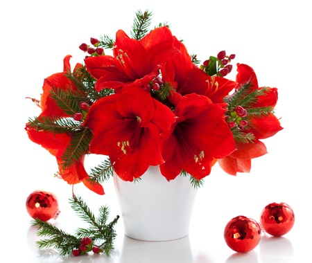 winter flower: red amaryllis in vase with Christmas decorations