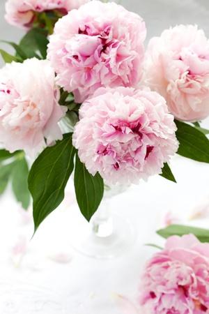 breakfast garden: Vase of peony blooms Stock Photo
