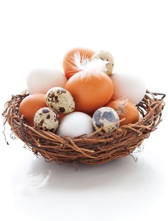 huevos de codorniz: Los diferentes tipos de huevos en un nido de plumas sobre un fondo blanco