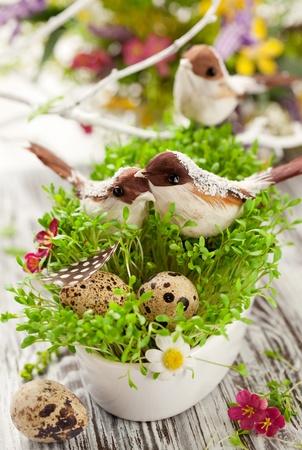 huevos de codorniz: Decoración de Pascua: aves y huevos en los berros frescos