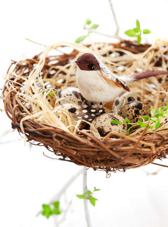 birds and quails eggs in an Easter nest photo