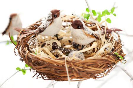 nido de pajaros: aves y codornices