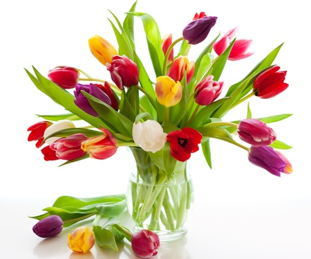 colorful tulips on the white background photo