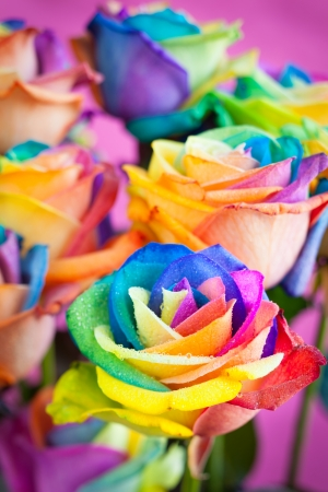 ramo de rosas de varios colores del arco iris rosa photo