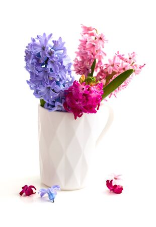 Hyacinths in a white cup Stock Photo - 17681049