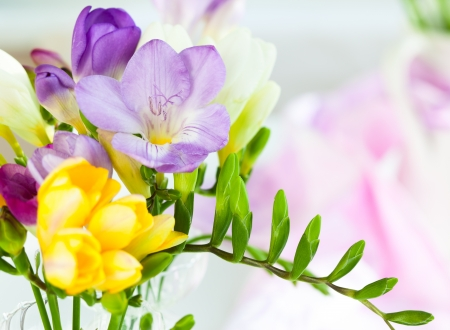purple flowers: bunch of colorful freesia flowers
