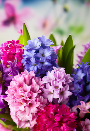 Group of beautiful multicolored hyacinths photo
