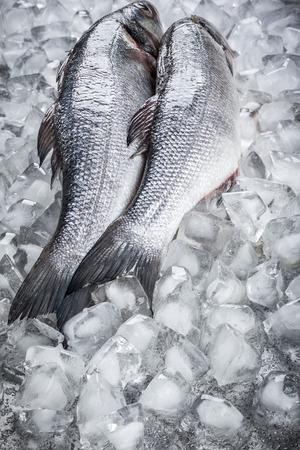 sea bass: Whole Sea bass on ice Stock Photo