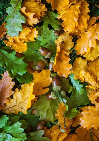 Herbst Hintergrund mit Eichenlaub und Eicheln