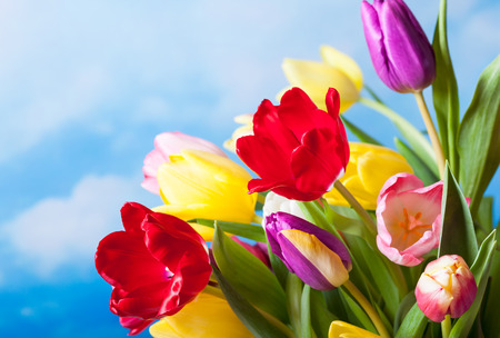 green flowers: Spring background with colorful tulips Stock Photo