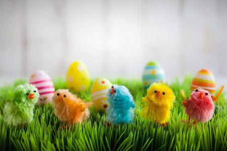 pascuas navide�as: pollitos de Pascua coloridos en la hierba verde Foto de archivo