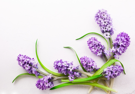Flowers composition with lilac hyacinths. Spring flowers on white background. Easter concept. Flat lay, top view.