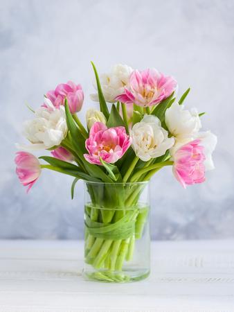 tulips 写真素材