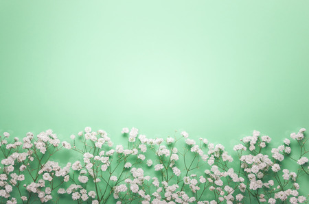 White flowers composition on pastel green background with copy spase. Flat lay style, top view, minimal style.