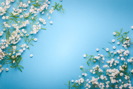 White flowers composition on pastel blue background with copy space. Flat lay style, top view, minimal style. Stock Photo