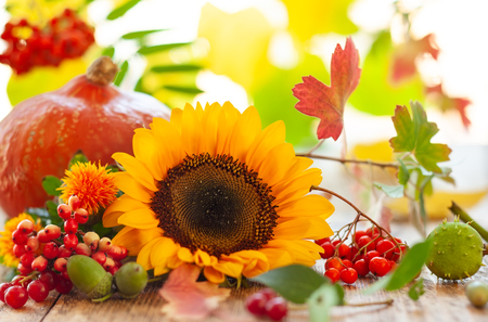 Sunflower, pumpkin and autumn berries on the wooden table. Stockfoto
